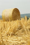 Bale of wheat strows Stock Photos