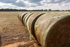 Baleage - Round hay bales wrapped in plastic Stock Image