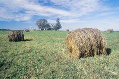Baled hay in field Royalty Free Stock Images