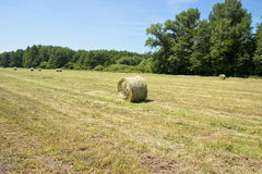 Baled Packs of Hay Royalty Free Stock Photos