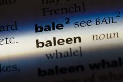 Baleen. Word in a dictionary.  concept stock image