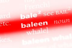 Baleen. Word in a dictionary.  concept royalty free stock images