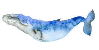 Baleia azul da aquarela Imagem de Stock Royalty Free