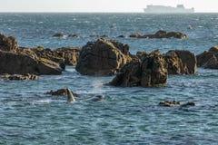 Baleia da orca em Wellington New Zealand, balsa na distância imagens de stock