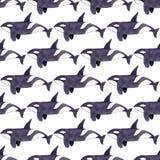 Baleia da orca ou de assassino Teste padrão sem emenda da aquarela Imagem de Stock Royalty Free