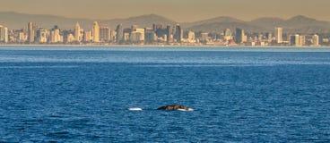 Baleia da skyline Foto de Stock Royalty Free