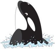 Baleia de assassino ilustração stock