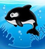 Baleia de assassino dos desenhos animados no mar Fotos de Stock