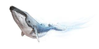 Baleia de corcunda em um fundo branco Efeito da onda do sumário da dispersão imagens de stock
