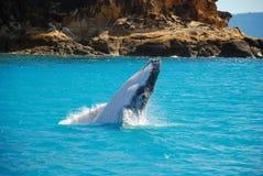 Baleia de Humpback que rompe fora da água Imagens de Stock Royalty Free