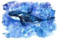Baleia e água de assassino de Big Blue ilustração royalty free