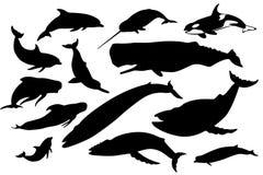 Baleia e golfinhos ajustados Fotos de Stock Royalty Free