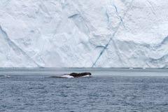 Baleia e iceberg Imagem de Stock Royalty Free