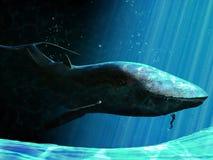 Baleia e mergulhador ilustração royalty free