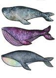 baleias ilustração do vetor