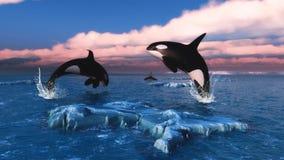 Baleias de assassino no oceano ártico ilustração do vetor