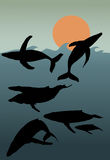 Baleias de corcunda Imagem de Stock Royalty Free