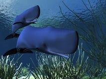 Baleias de esperma Foto de Stock