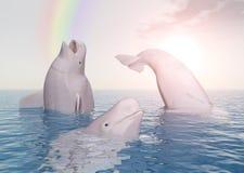 Baleias e arco-íris da beluga ilustração stock