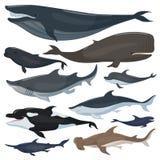 Baleias, tubarões dos golfinhos e outros animais náuticos dos mamíferos ilustração royalty free