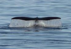 Baleine Photos stock