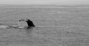 Baleine Images stock