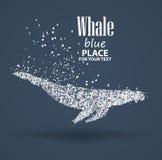 Baleine bleue, composition divergente en particules, d'isolement sur le fond Image libre de droits