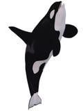 baleine d'orque de tueur illustration de vecteur
