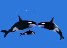 Baleine d'une famille photos stock