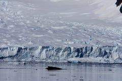 Baleine dans le port de paradis, Antarctique Photographie stock