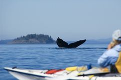 Baleine de bosse et kayak Images stock