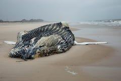 Baleine de bosse femelle morte sur l'île du feu, Long Island, plage, avec le sable dans le premier plan et l'Océan Atlantique à l Image libre de droits