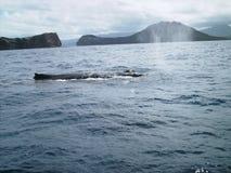 Baleine de bosse (Oahu) Photos libres de droits