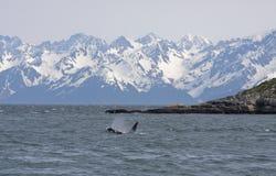 Baleine et montagnes Images libres de droits