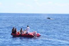 Baleine observant d'un bateau gonflable photo stock