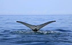 Baleine observant dans Puerto Vallarta Photographie stock