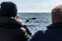 Baleine observant, queue de cachalot Photo libre de droits