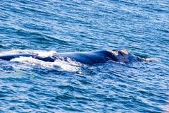 Baleine seule images libres de droits