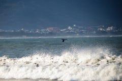 Baleine sur la côte brésilienne Photo libre de droits