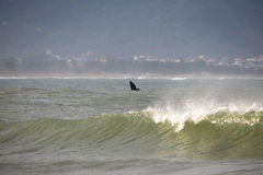 Baleine sur la côte brésilienne Image libre de droits