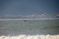 Baleine sur la côte brésilienne Image stock