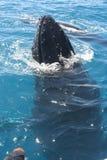 Baleines Photographie stock libre de droits