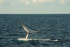 Baleines Image stock