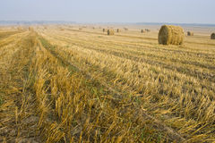 balen fields hö Royaltyfri Bild