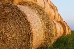 Balen van Hay Rolled Into Stacks Broodjes van Tarwe in het Gras Balen van stro Stock Fotografie