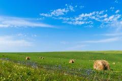 Balen van hooi op groen gras tegen een blauwe hemel Royalty-vrije Stock Fotografie