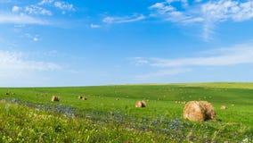 Balen van hooi op groen gras tegen een blauwe hemel stock video