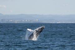 Balena Fotografia Stock