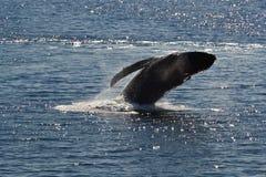 Balena, Alaska Immagine Stock