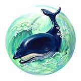Balena blu Fotografie Stock